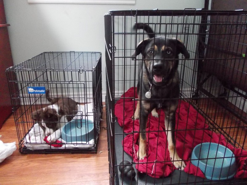 Crates-Dudley-and-Fiona1