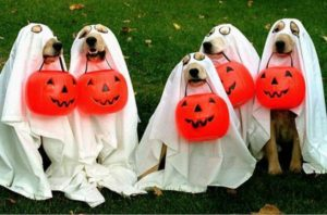 dog-ghosts